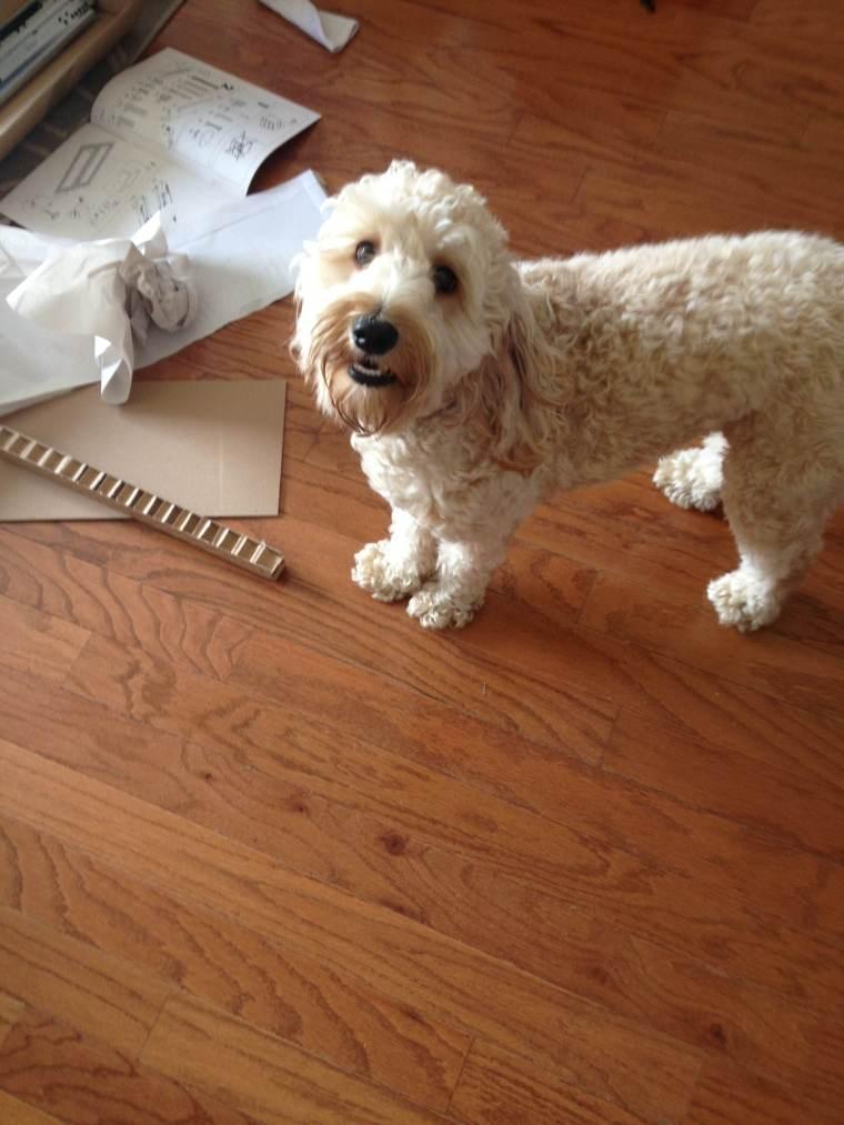 The cutest helper in town!