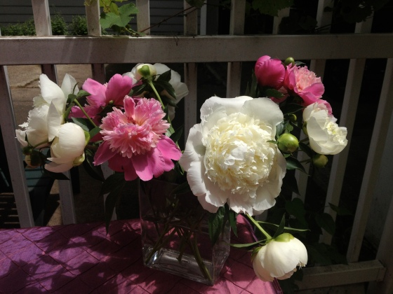 My favorite flowers. Pretty, pretty peonies!