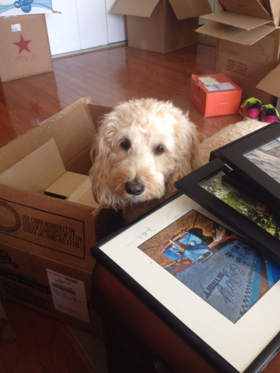 Brinkley helping us pack. Moved to Ann Arbor July 1st 2014!